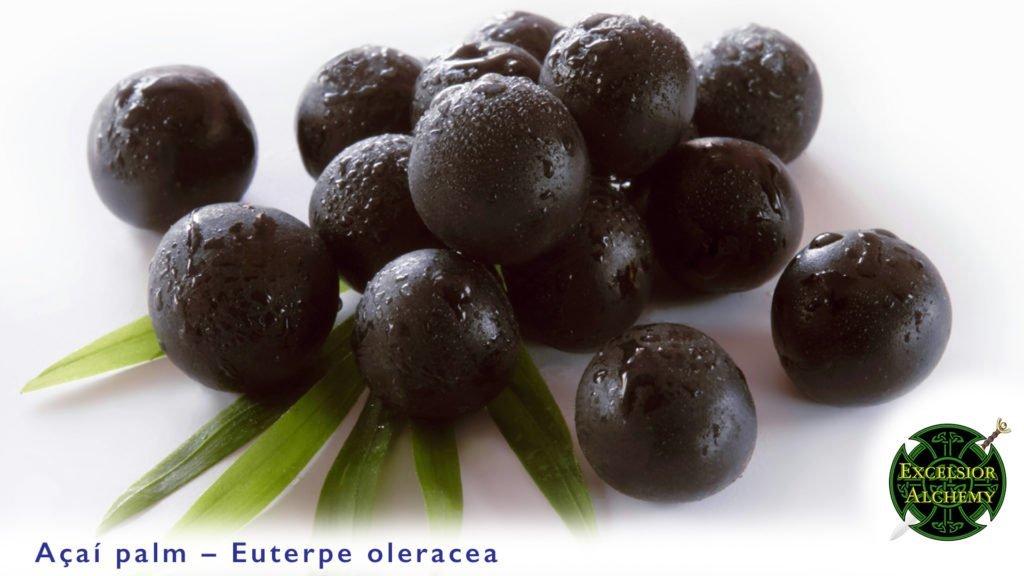 Acai, Euterpe oleracea