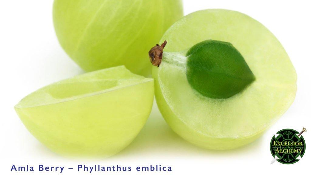 Amla Berry, Phyllanthus emblica