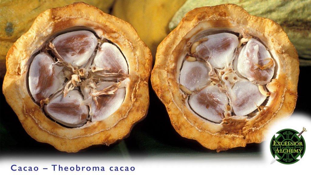 Cacao, Theobroma Cacao