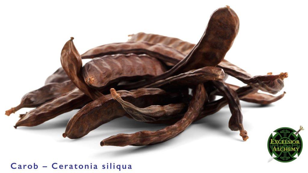 Carob, Ceratonia siliqua