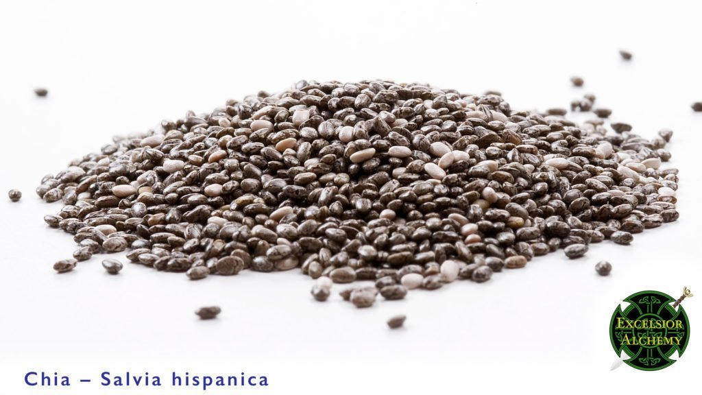 Chia, Salvia hispanica