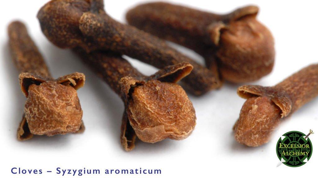 Cloves, Syzygium aromaticum