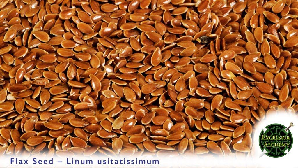 Flax Seed, Linum usitatissimum