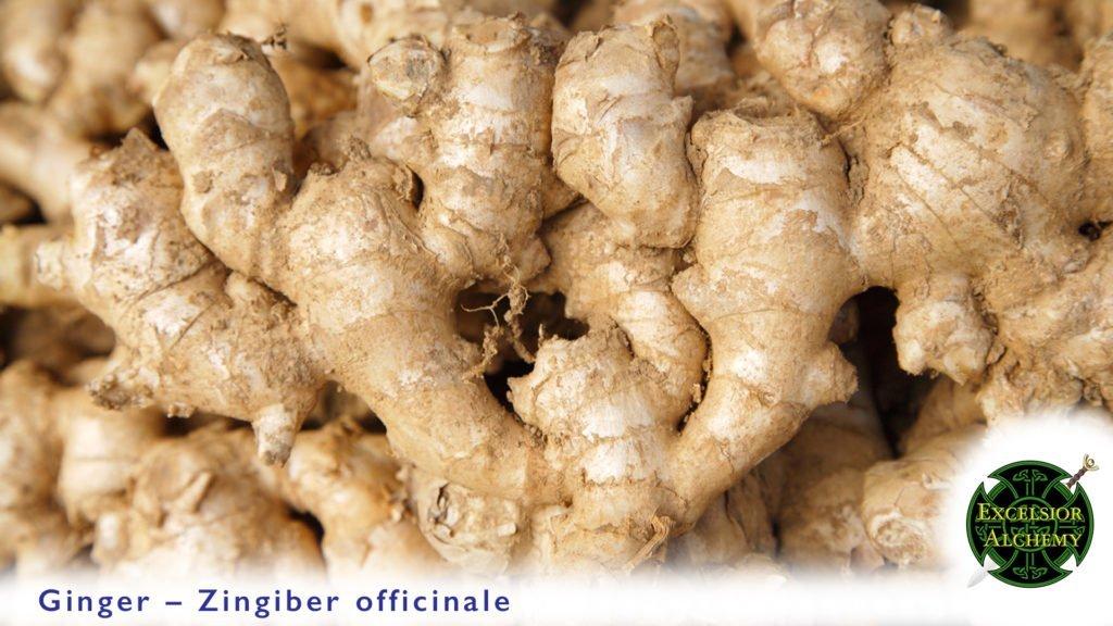 Ginger, Zingiber officinale
