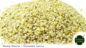 Hemp Hearts, Cannabis Sativa