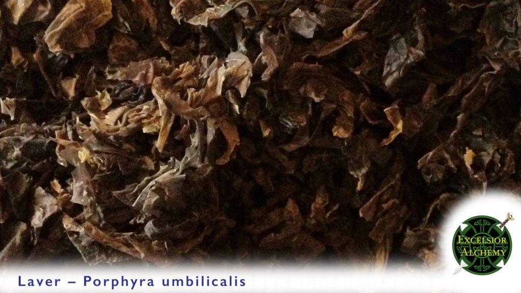 Laver, Porphyra umbilicalis