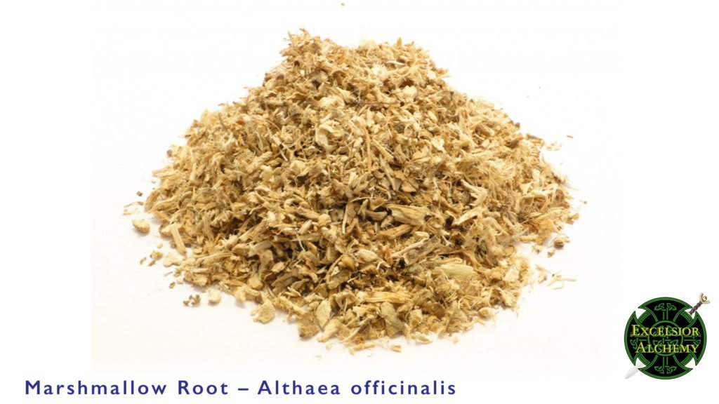 Marshmallow Root, Althaea officinalis