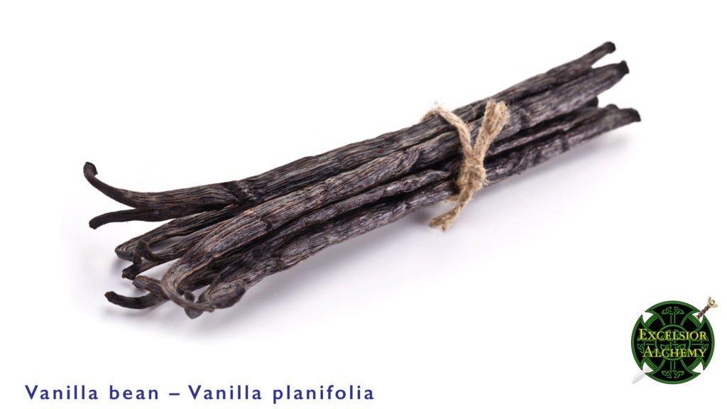 Vanilla Bean Vanilla planifolia